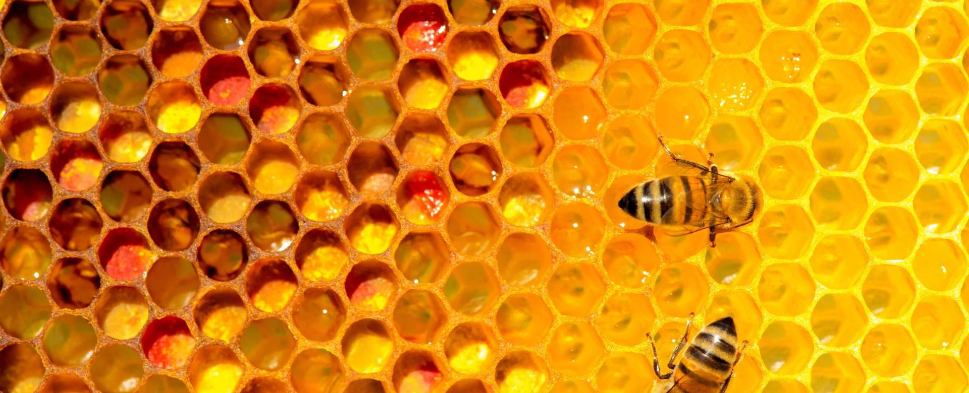 Bee Benefits